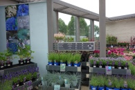 The seried rows of plants