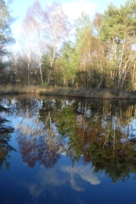 Sapper Pond reflections