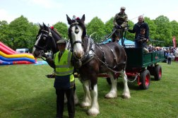 The lovely Fullers Dray horses