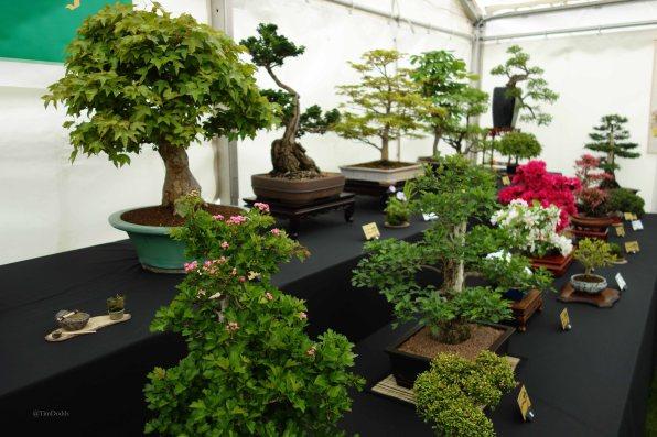 2-Surrey Heath Bonsai Society exhibition