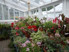 7-Inside a greenhouse