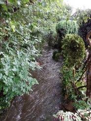 Lightwater Stream