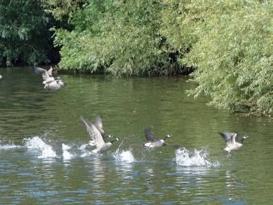 6-Plenty of wildlife to see