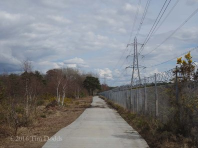 1-Protective track in Folly Bog