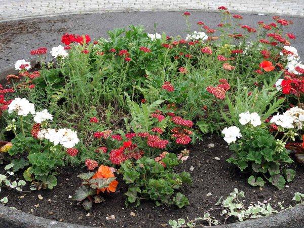 Briar Avenue planter