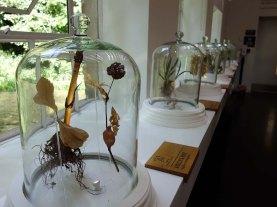 12-More botanicals