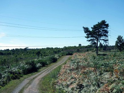 1-The path is almost opposite the Scots Pine tree