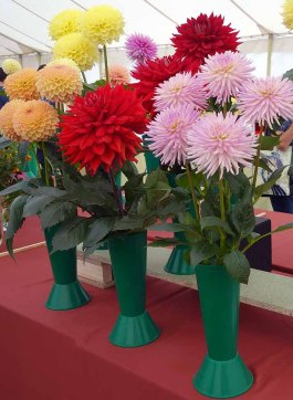 12-Exhibit in the Horticulture Tent