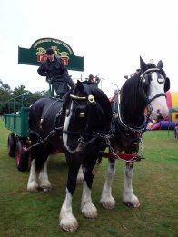 1-john-medhurst-the-fullers-dray-horses