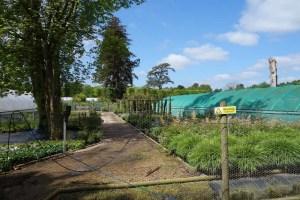 a-working-nursery-not-a-garden-centre
