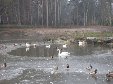 1-winter-at-hammonds-pond-lightwater-country-park