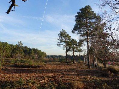 1-brentmoor-heath-near-greyspot-grenade-range