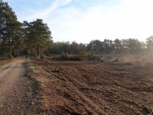 3-brentmoor-heath-looking-back-towards-the-greyspot-grenade-range