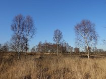 3-chobham-common-heathland-view