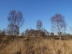 3-chobham-common-heathland-view