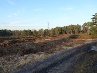 4-brentmoor-heath-near-the-bowl-barrows