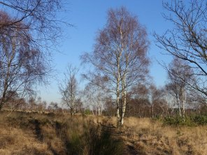 4-chobham-common-heathland-view