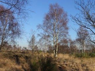 4-chobham-common-heathland-view