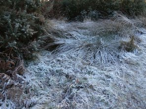 5-frost-on-chobham-common
