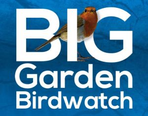 biggardenbirdwatch