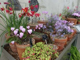 11-Plants in the Alpine House