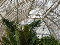3-Palms in the Palm House