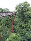5-Treetop Walkway