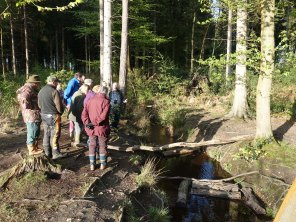 Bagshot Woods - Windle Brook