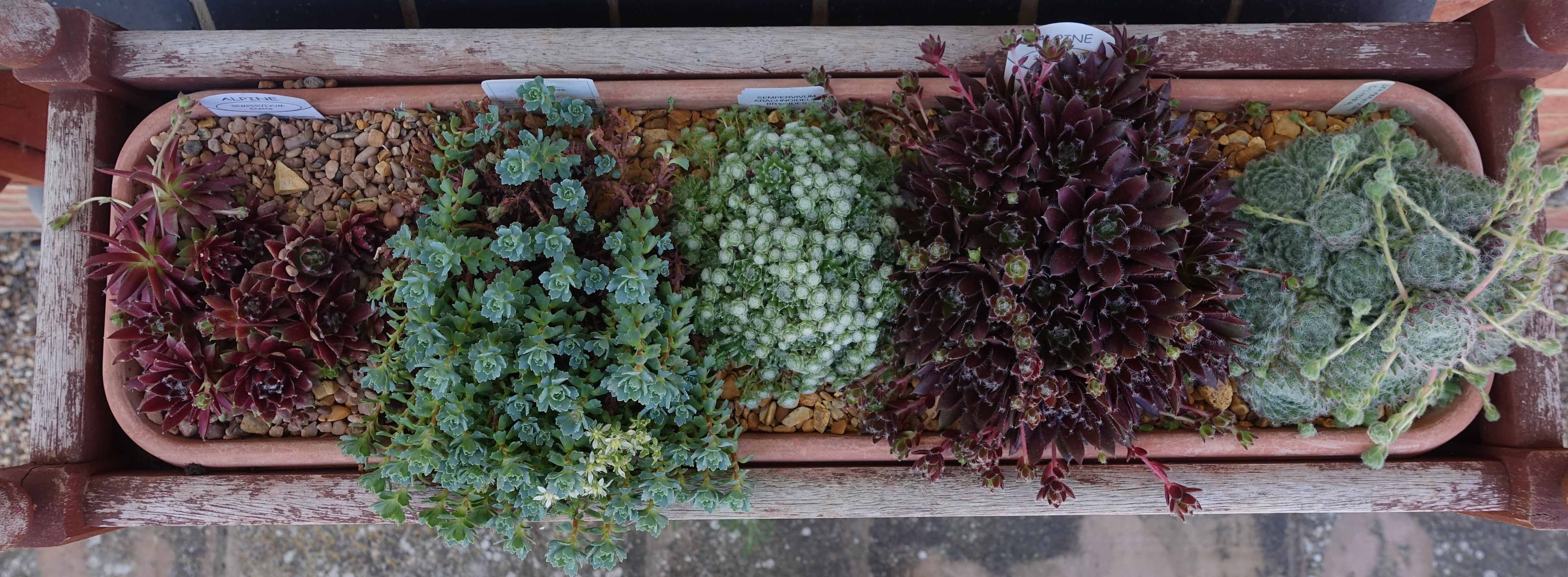 right-hand-window-box-after_3.jpg