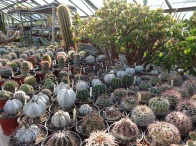 5-Mixed cacti varieties