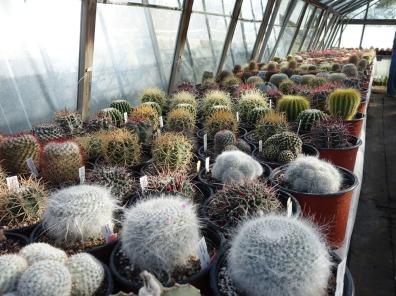 6-Mammillaria