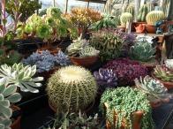 8-Exhibition Cacti