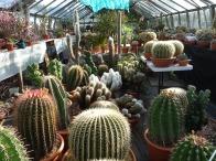 9-Exhibition cacti