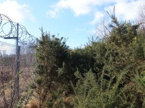 Heathland by Folly Bog