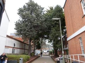 Trees in Knoll Walk