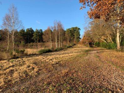 Brentmoor Heath Nov19