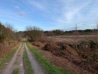 Heathland track_3