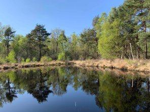 Sapper Pond