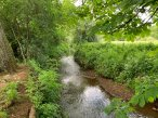4-Chobham Water Meadows