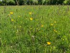 6-Chobham Water Meadows