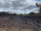 7-Part of Brentmoor Heath burnt